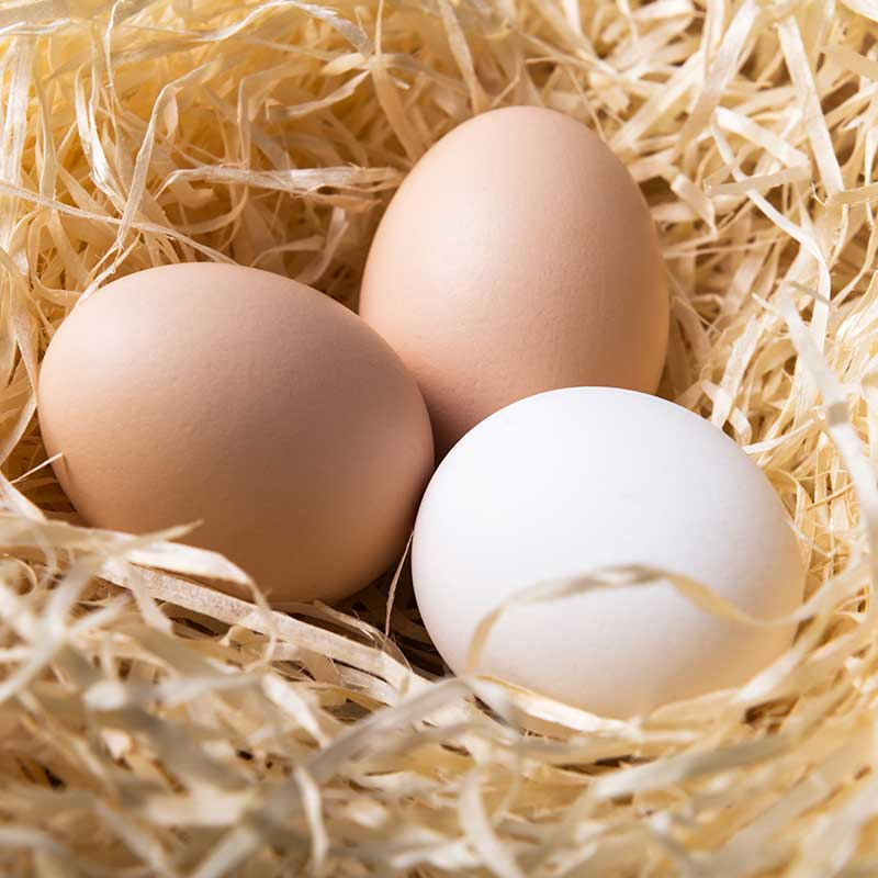 Fresh eggs | Featured image for restaurant suppliers home page.