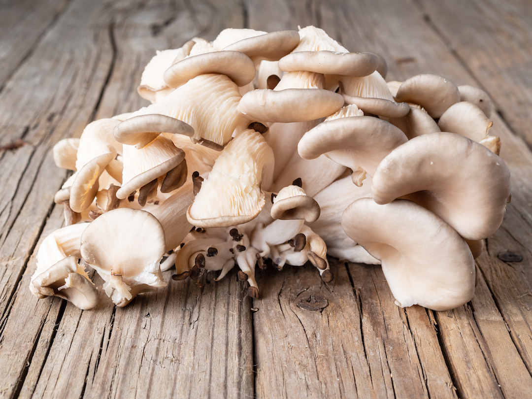 Image of oyster mushrooms | Featured image for wholesale mushrooms.